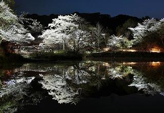 御船山園夜桜